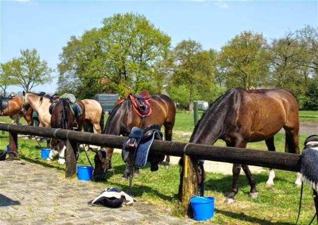Paarden_01-Roggel
